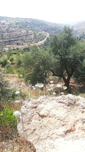 Beyt Jalla Beyt Jala Bayt Dschalla West Bank Machrout Valley Palestine Palestinian Lavender Color Hiking Valley Israel Machrour Valley Palestinian Territory Traveling Near East Taking A Stroll