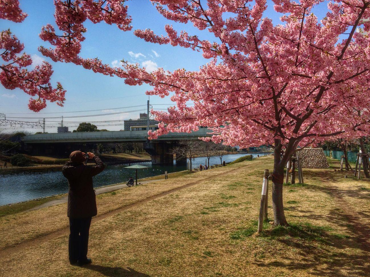 Kawazu-zakura Springtime Tadaa Community 500px 向けに選んだベストショットは、結局、この5s撮りだったりする (^^;