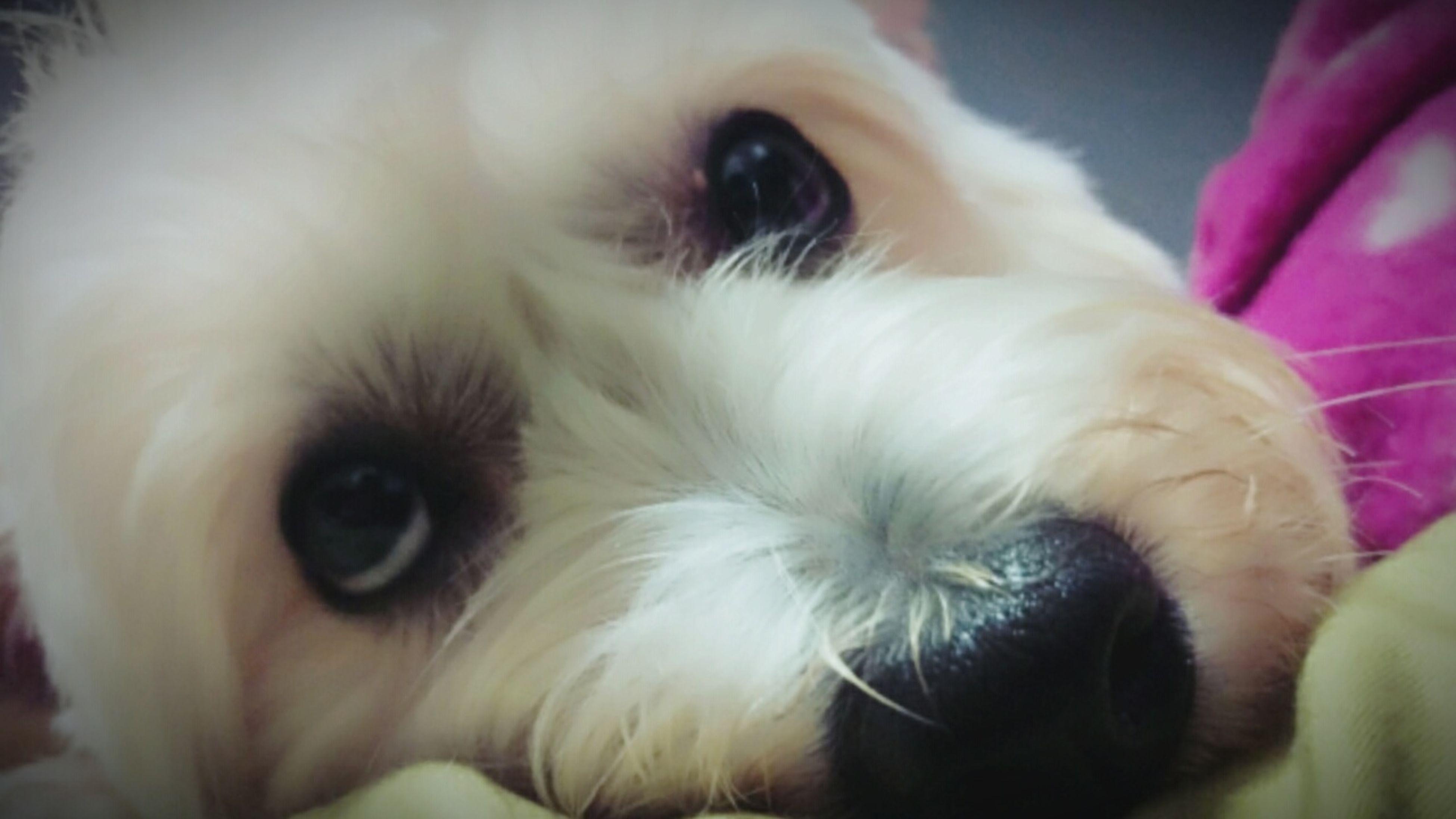 I Love My Dog Family❤ Taking Photos Earthquake 上帝,晚上別再震了喔~~