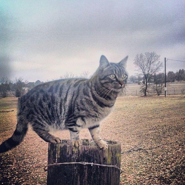 Jw Changeup Offspeed Boylers cat