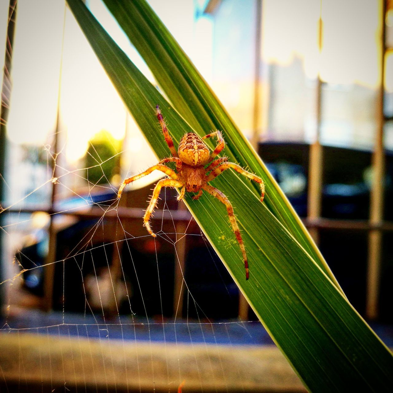 Spider Nature Animals In The Wild Close-up One Animal Insect No People Outdoors Web Beauty In Nature Animal Wildlife Spider Web Ragno Garden Photography Garden Giardino Animal Themes City Wildlife Spider