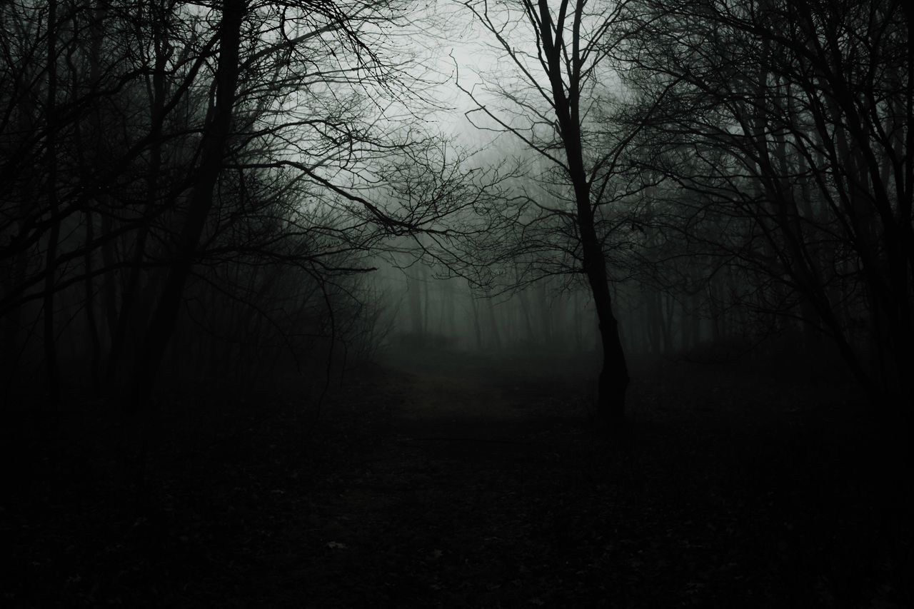 Lost in my own conscience. Tree Nature Fog Silhouette Bare Tree Forest Tranquility Outdoors Beauty In Nature No People Scenics Landscape Branch Sky Day Light And Shadow Dark Darkness And Light Winter Low Key EyeEm Best Edits Desaturated Pennsylvania EyeEm The Way Forward