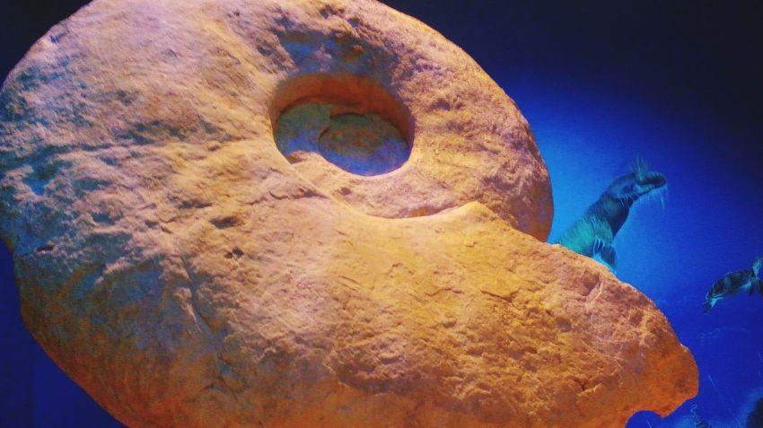Trilobite Fossil Fossil Trilobite Fossils And Rocks Fossil First Eyeem Photo