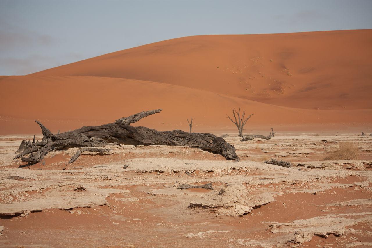 Beautiful stock photos of desert, Arid Climate, Cloud, Day, Dead Plant
