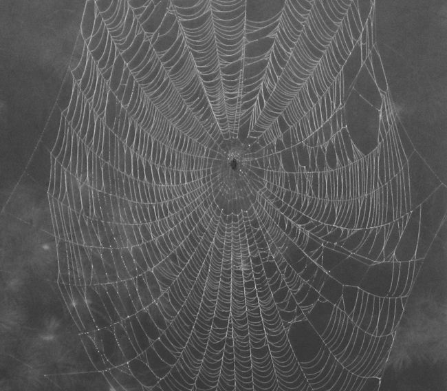 Spider Webs Micro Nature Happy Holoween 2013