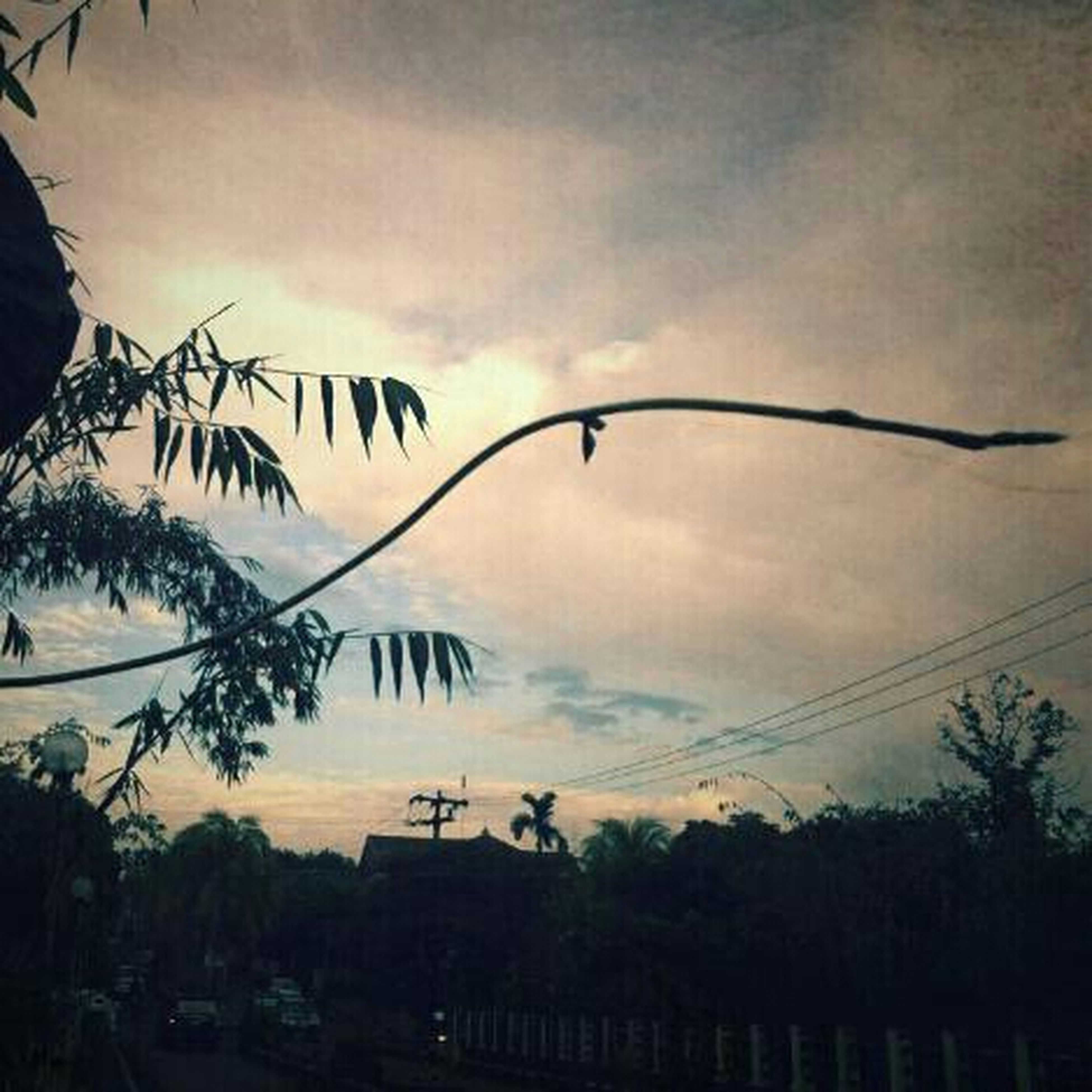 sky, sunset, silhouette, cloud - sky, cloudy, low angle view, tree, power line, cloud, nature, beauty in nature, dusk, tranquility, scenics, orange color, palm tree, tranquil scene, outdoors, cable, dramatic sky