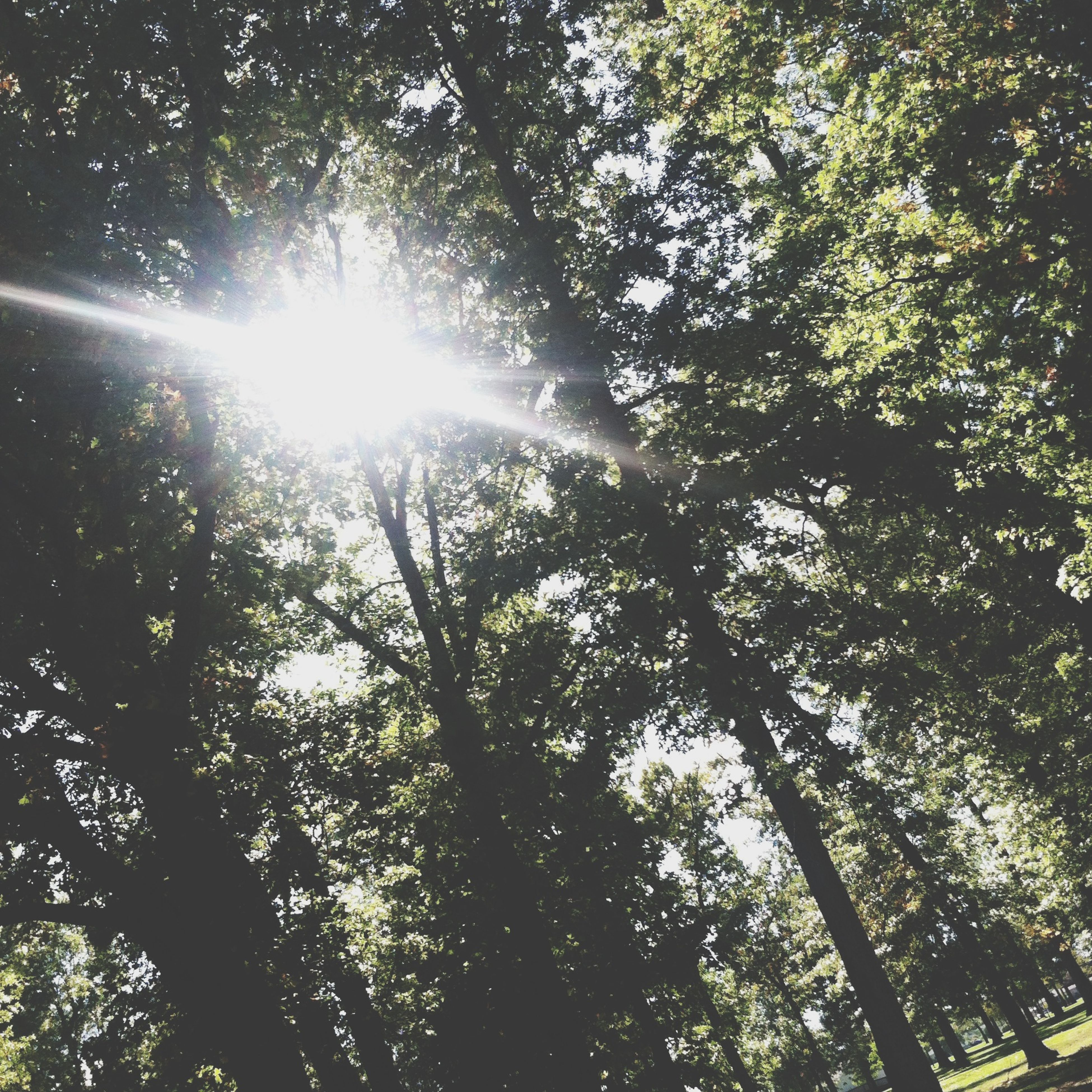 tree, low angle view, sun, growth, branch, sunbeam, sunlight, nature, lens flare, tranquility, beauty in nature, sky, forest, day, outdoors, no people, directly below, backgrounds, streaming, full frame