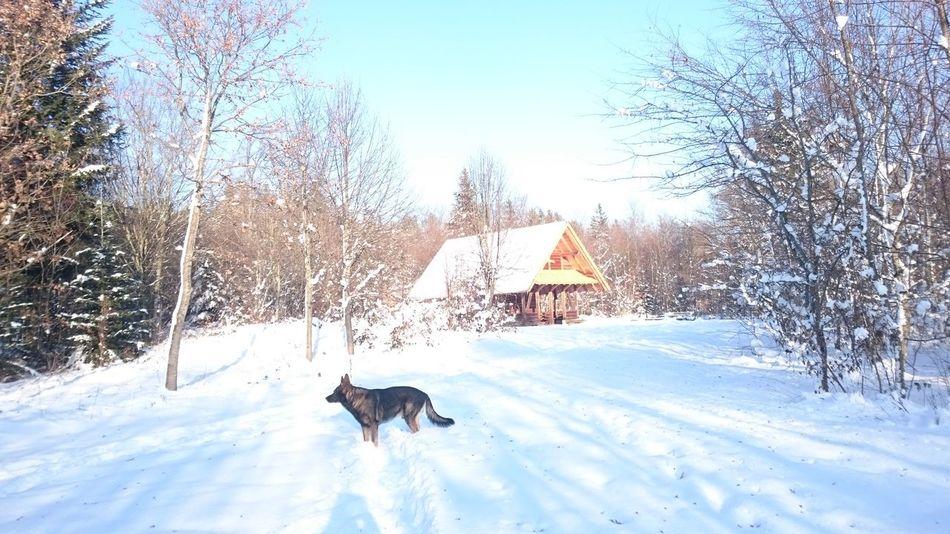 Winterday Winter Landscape Winterwald Hunderunde Schnee Schwarzwald Black Forest