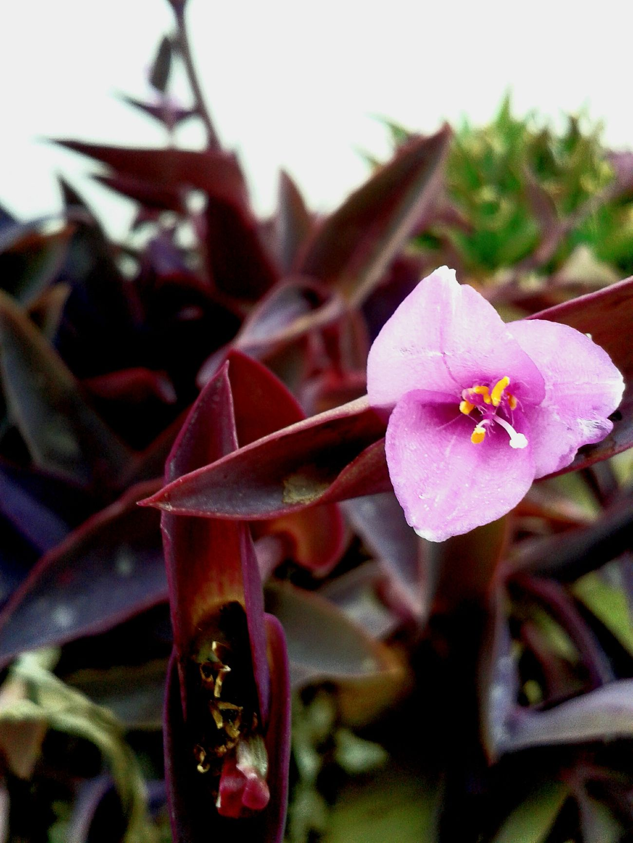 Flower Plant Pink Color Detailed To Perfection Happy New Years Eve