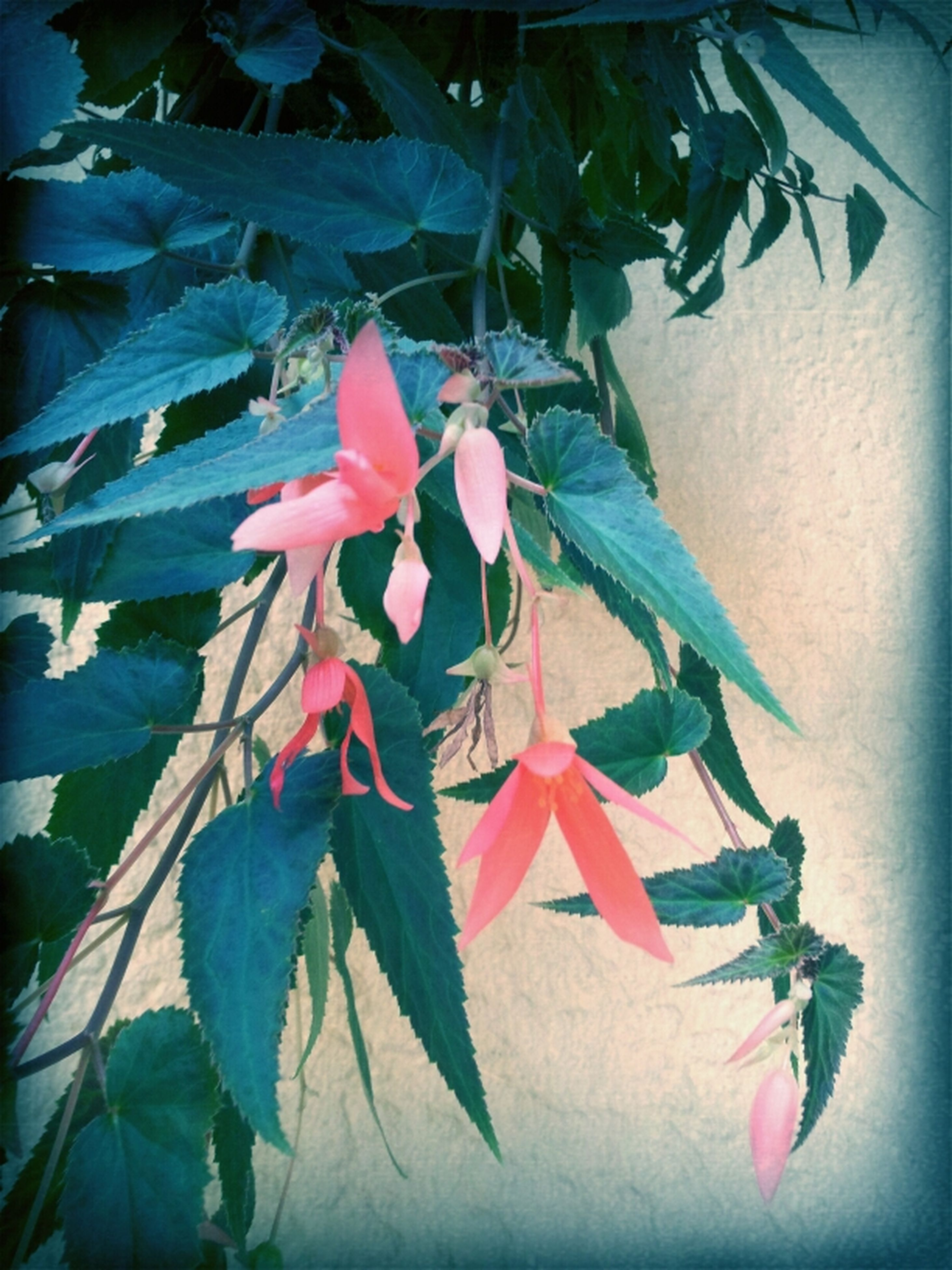 leaf, flower, low angle view, growth, petal, fragility, plant, freshness, wall - building feature, nature, close-up, beauty in nature, no people, built structure, day, hanging, multi colored, outdoors, flower head, decoration