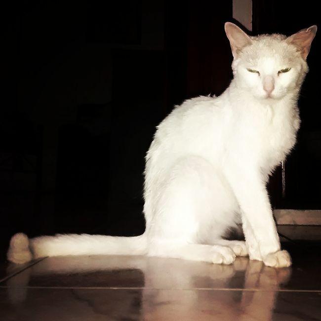 Natural Beauty Beautiful Cat Mascotas
