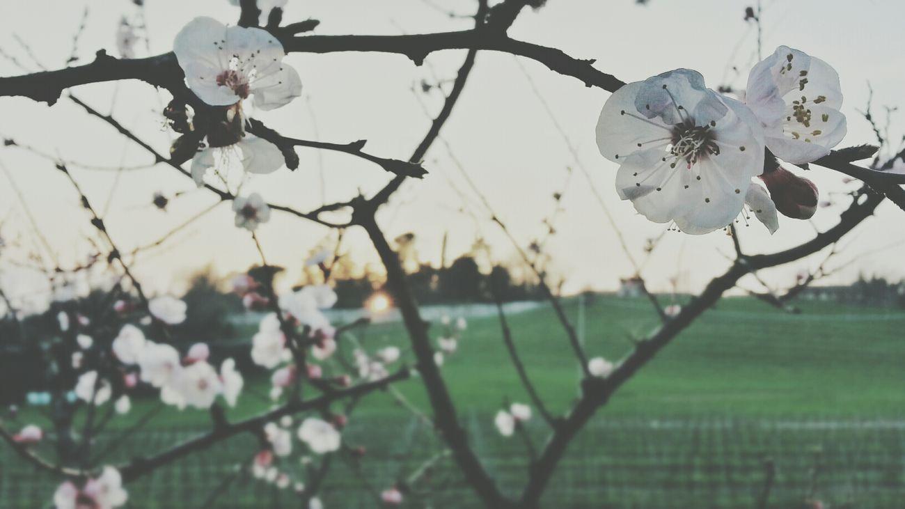 Probabilmente sono in ritardo per i fiori Flower Spring Yesterday Landscape