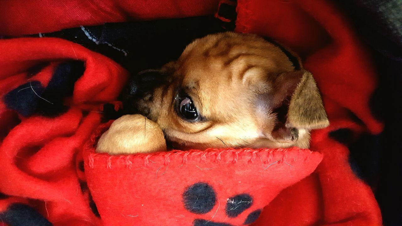 Animals Close-up Red Portrait Animal Themes No People Indoors  Day Monkey Mammal Babydog