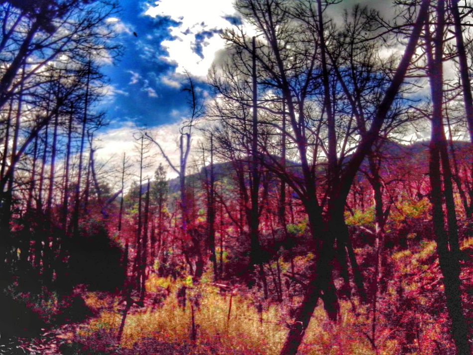 Chiricahua Mountains After The Fires Hdr Edit