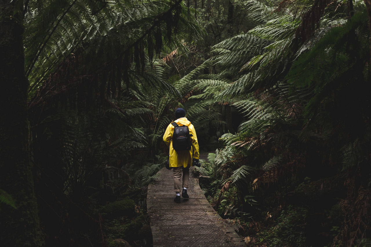 adventure branch Bushwalking day exploration full length Green Growth Hiking journey lifestyles moving up Narrow Nature on the move outdoors Rear view the way forward tourism tranquil scene Tranquility Tree tunnel walking wilderness