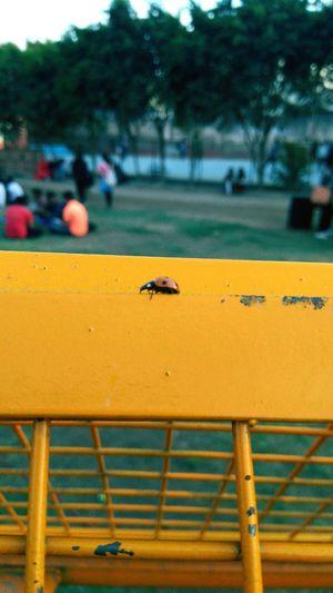Mobilephotography Naturesbeauty Nature_collection NorthCampusDu Delhiuniversity Mobile Photography Taking Photos Randomshot Ladybug Redandblack Kirorimalcollege