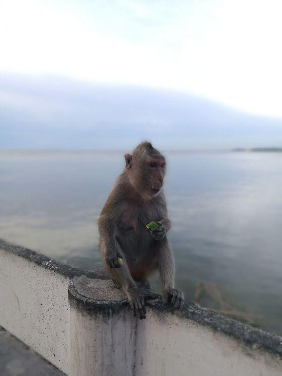Beachy monkey 2 Monkey Beach Bangsean Chonburi Thailand HuaweiP9 Leica Lens Nofilter