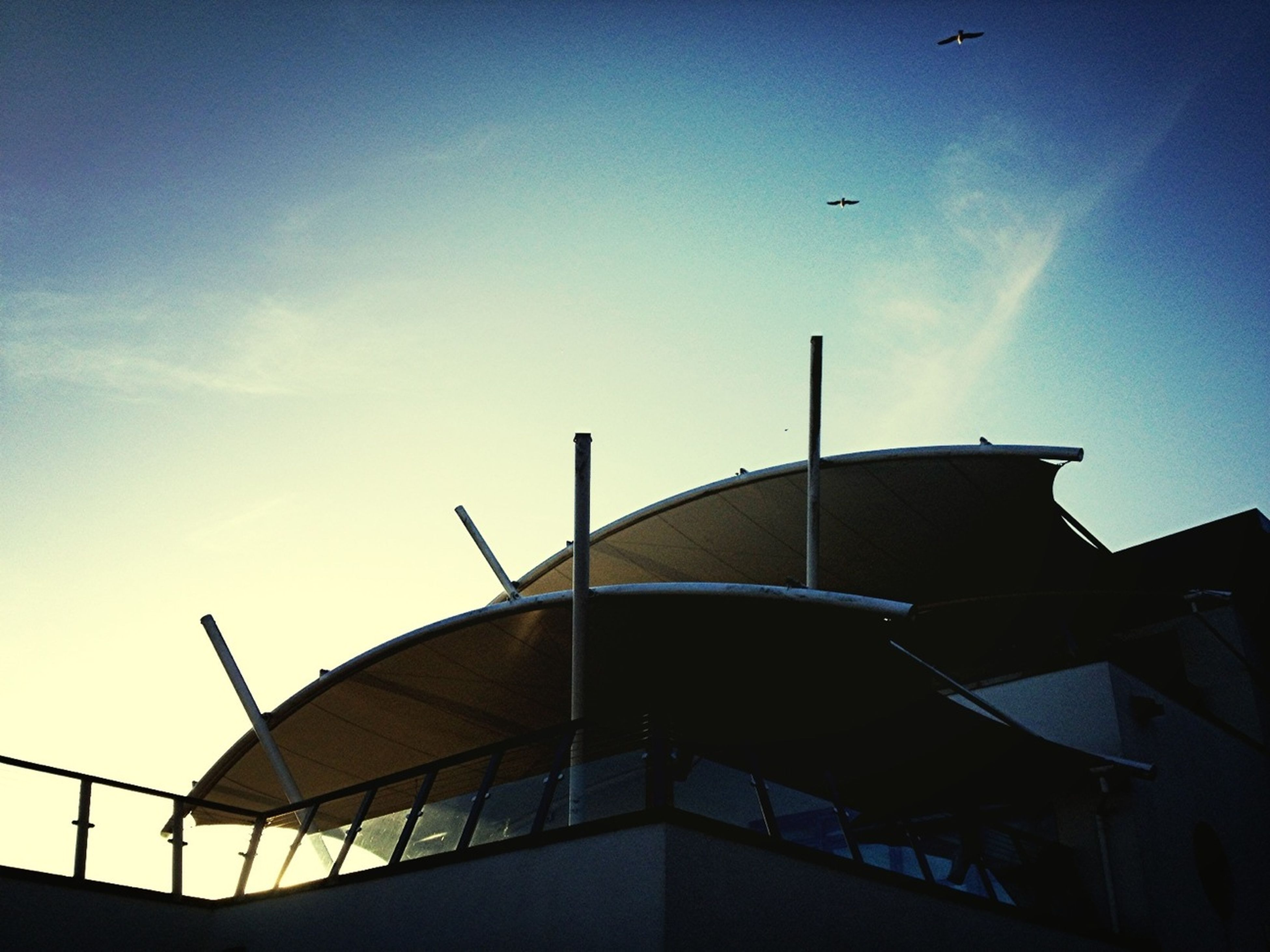 low angle view, built structure, architecture, sky, bird, flying, building exterior, clear sky, sun, sunlight, animal themes, silhouette, outdoors, sunset, no people, blue, copy space, day, animals in the wild, wildlife