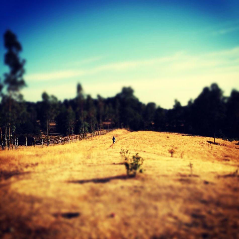 Cruzando el campo.