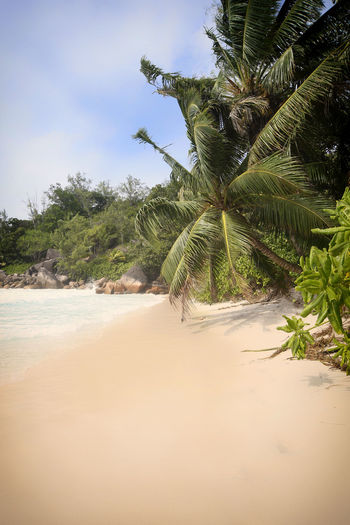 Beach Beauty In Nature Day Growth Nature No People Outdoors Palm Tree Praslin Praslin Seychelles Sand Scenics Seychelles Seychelles Islands Sky Tranquil Scene Tranquility Travel Destinations Travel Photography Tree Water Anse Georgette