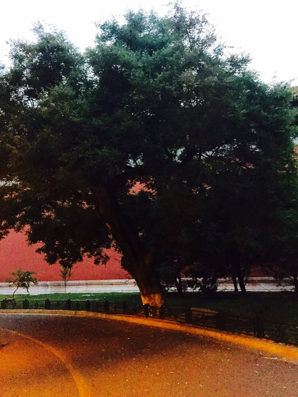 View Of Tree By Road