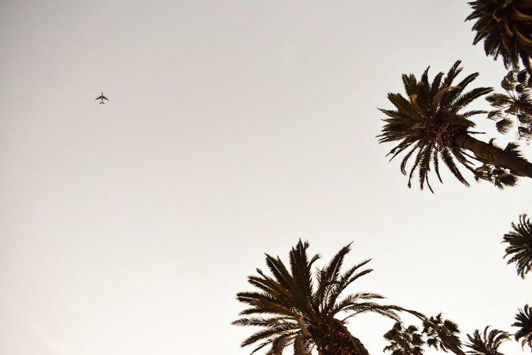 c a l i Palm Tree California Santa Monica Flying Sky No People Beauty In Nature Nikon Clear Sky Photography First Eyeem Photo