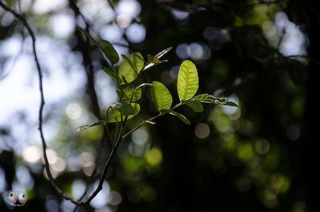 Nature Fotografiaéarte Vitaonatureza Olharnatural Phtographydocumentary Terra  Fotografia Verde Photoart Natureza Victornatureza Green Photography Natural Arte