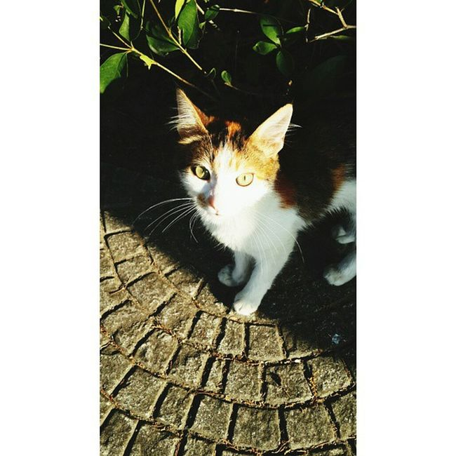 Sabah guzeli Cat Kitten Sun