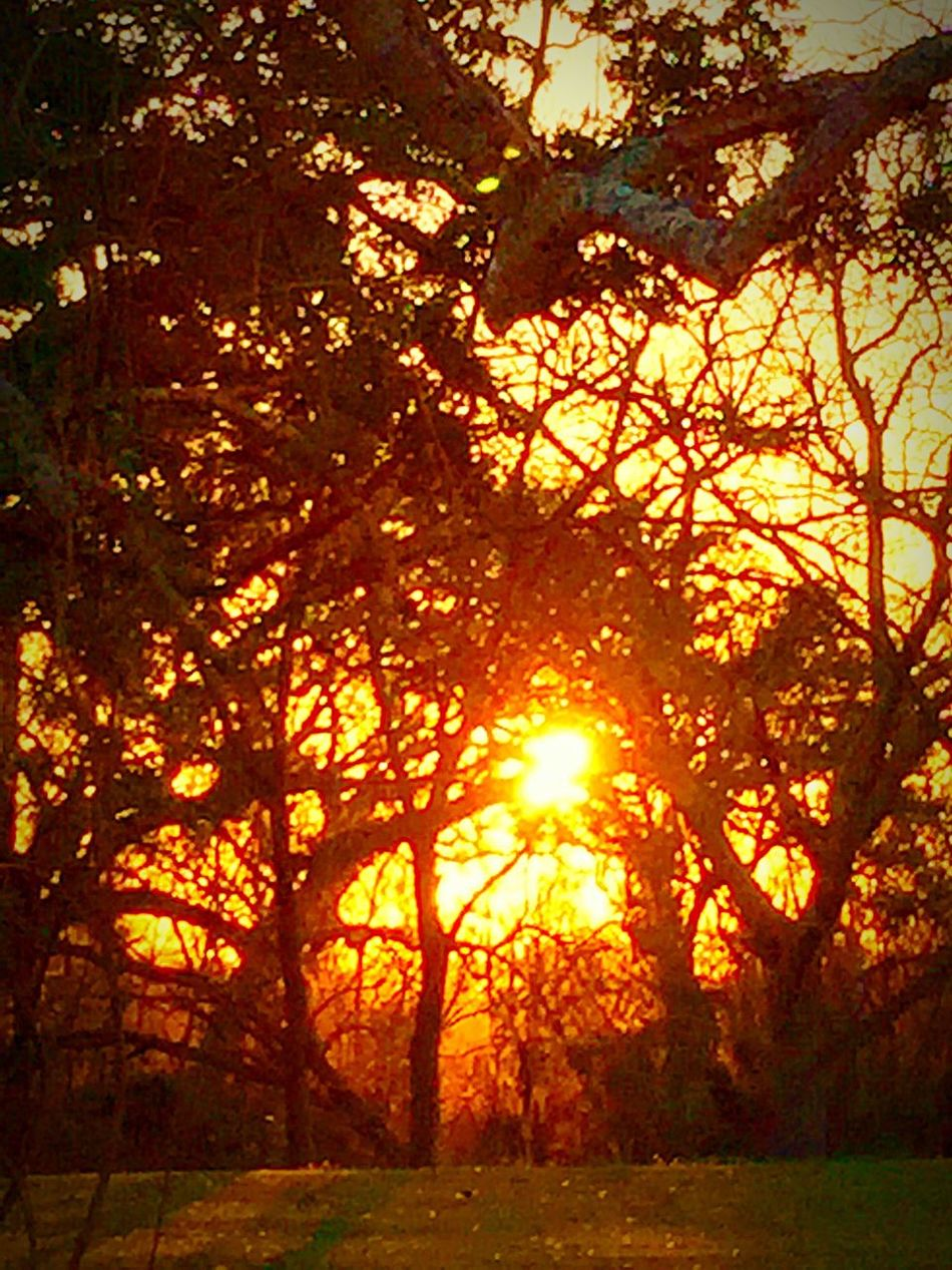 Out for my early morning walk. Watching the beautiful sun rise. EyeEm Best Shots - Landscape TreePorn CreativePhotographer Tree Hugger Lookingup Sunrise_sunsets_aroundworld Myuniquestyle Skylovers Skyporn The EyeEm Facebook Cover Challenge For My Friends That Connect Tadaa Friends Streamzoo Family EyeEm Best Shots Creative Light And Shadow EyeEm Masterclass Sky And Trees Sky_collection Enjoying The Sun EyeEm Best Shots - Sunsets + Sunrise Sunset #sun #clouds #skylovers #sky #nature #beautifulinnature #naturalbeauty #photography #landscape Sun_collection, Sky_collection, Cloudporn, Skyporn Light Up Your Life Light And Shadow Huggingatree