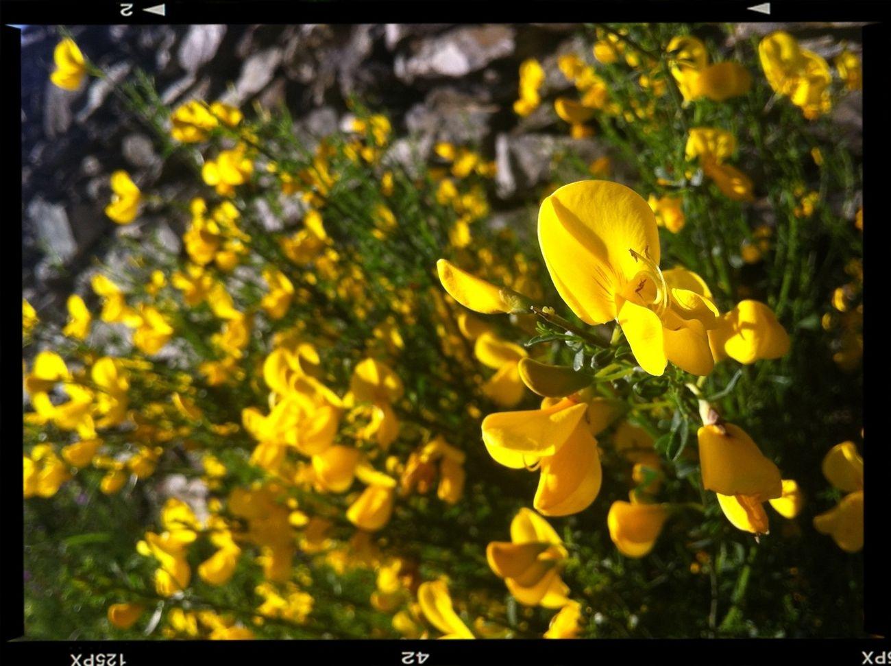 Flowers Spring Spring Flowers VivirExtremadura