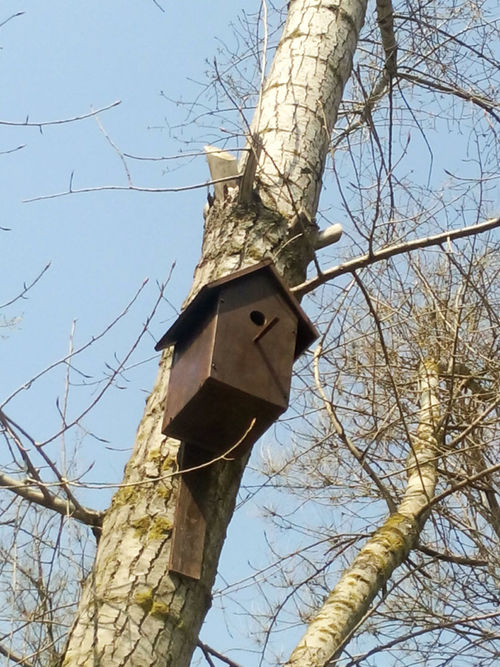 Cortex Beauty Коричневый красота Nature Beauty In Nature Tree No People Outdoors Day дерево ствол Brown Природа Leaf Nesting Box The House For Birds Birds Spring начало весны