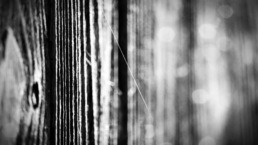 Backgrounds Black & White Black And White Black And White Photography Blackandwhite Blackandwhite Photography Close-up Day Detail Details Of Nature Focus On Foreground Full Frame Nature_collection No People Often Overlooked Outdoors Pattern Selective Focus Small Things Spider Web Spiderweb Textured  Wood - Material Abstract