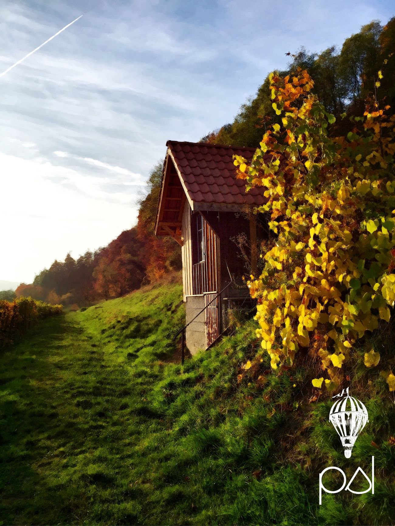 The golden hour. Taking Photos Sunset Landscape Nature EyeEm Best Shots Eyem Nature Lovers  Autumn Leaves Autumn Sunset_collection Forest