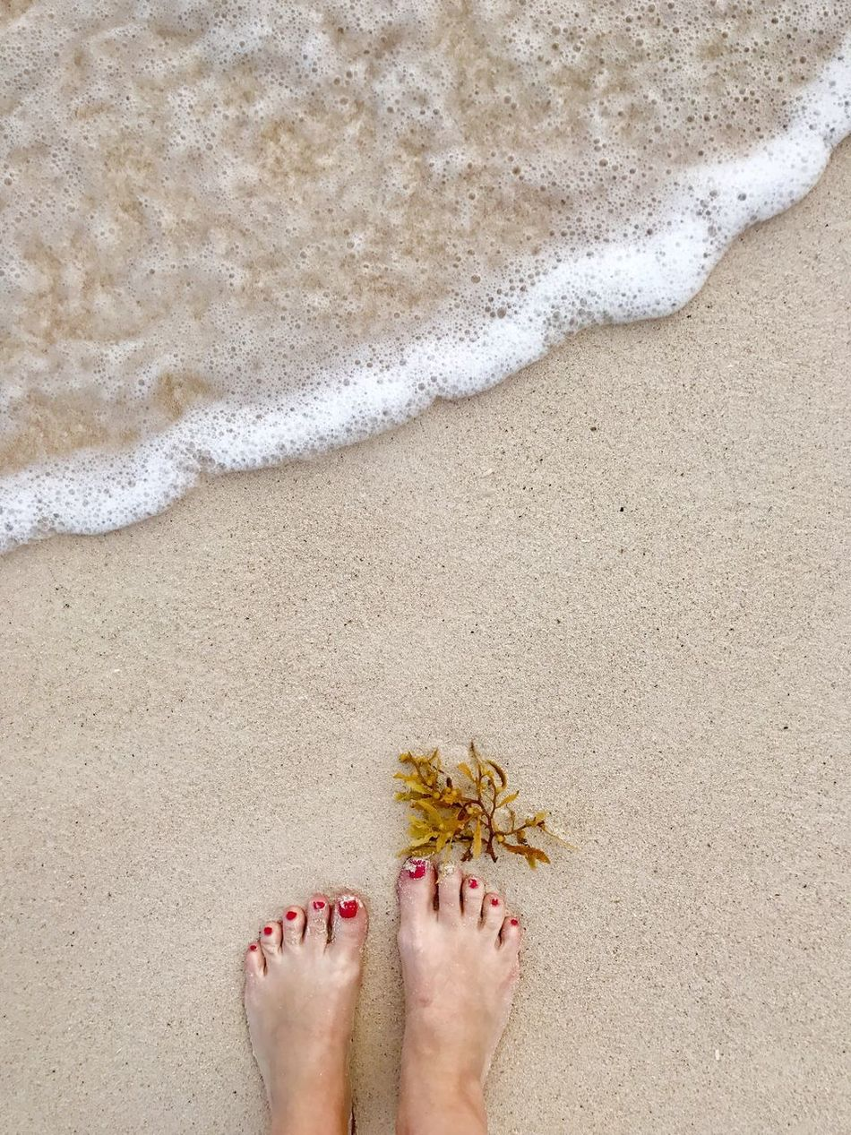Sand Beach Barefoot Real People One Person Human Foot Low Section Nail Polish Mexico Seaweed Day Personal Perspective Sea Outdoors Human Body Part Leisure Activity Women Standing Vacations Nature