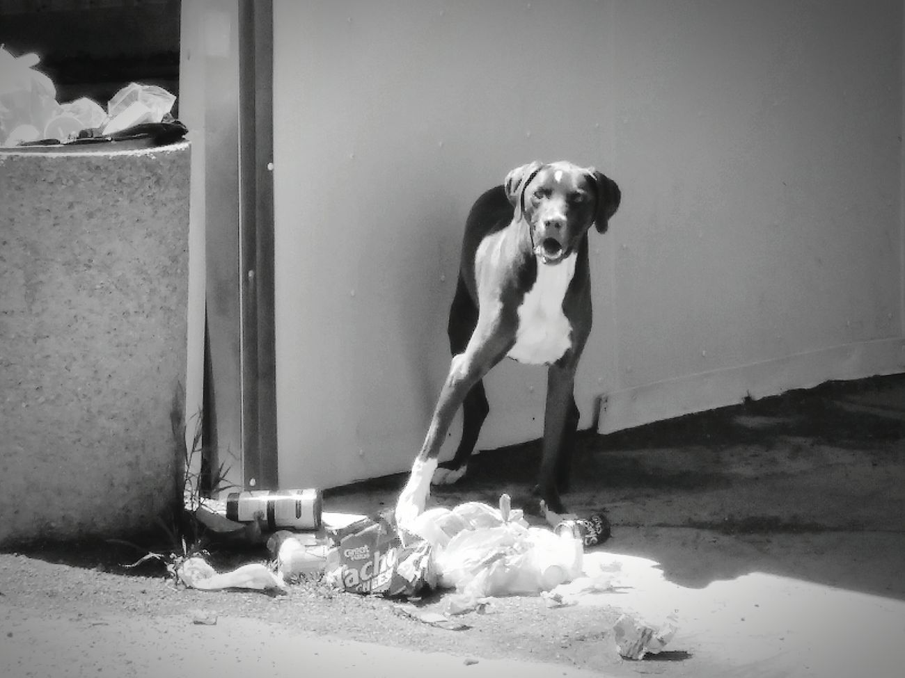 Dog Pets Outdoors No People Black&white♥ Looking At Camera Standing EyeEmNewHere Stray Animal Capturing Emotion