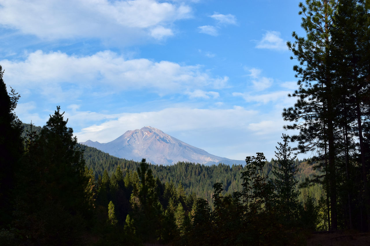 Mount Shasta viewed from Interstate 5 in northern California. Beauty In Nature California Cloud - Sky Day Forest Landscape Mount Shasta Mountain Nature No People Outdoors Scenics Sky Tranquil Scene Tranquility Tree