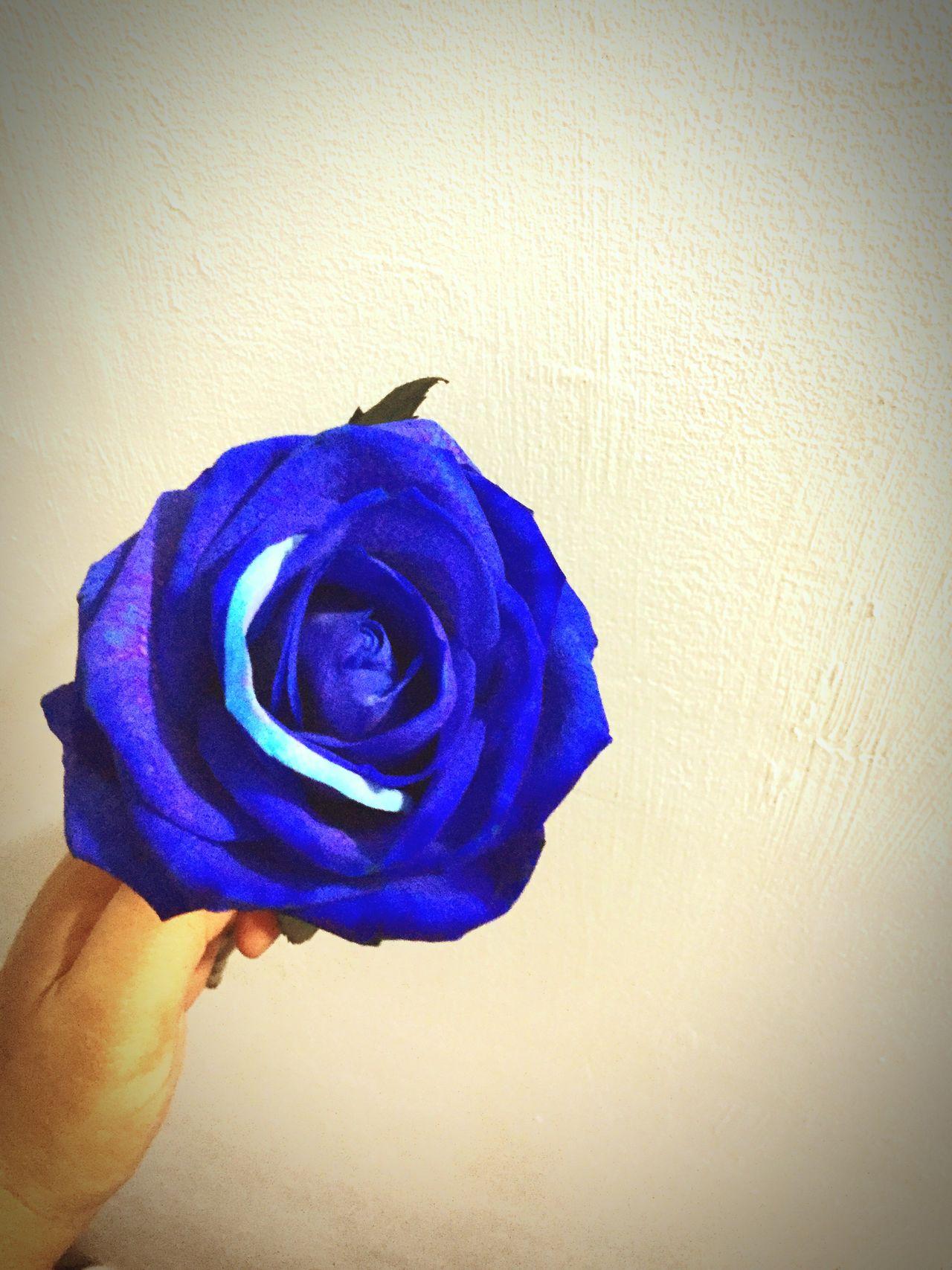 Rose🌹 Blue Beautiful Flower Lovely Happy Teachers Day