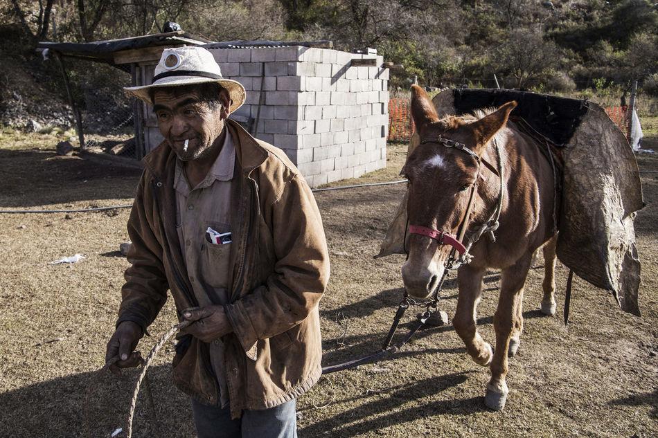Argentina Day Donkey Ground Leisure Activity Lifestyles Losandes Mountain Outdoors Portrait