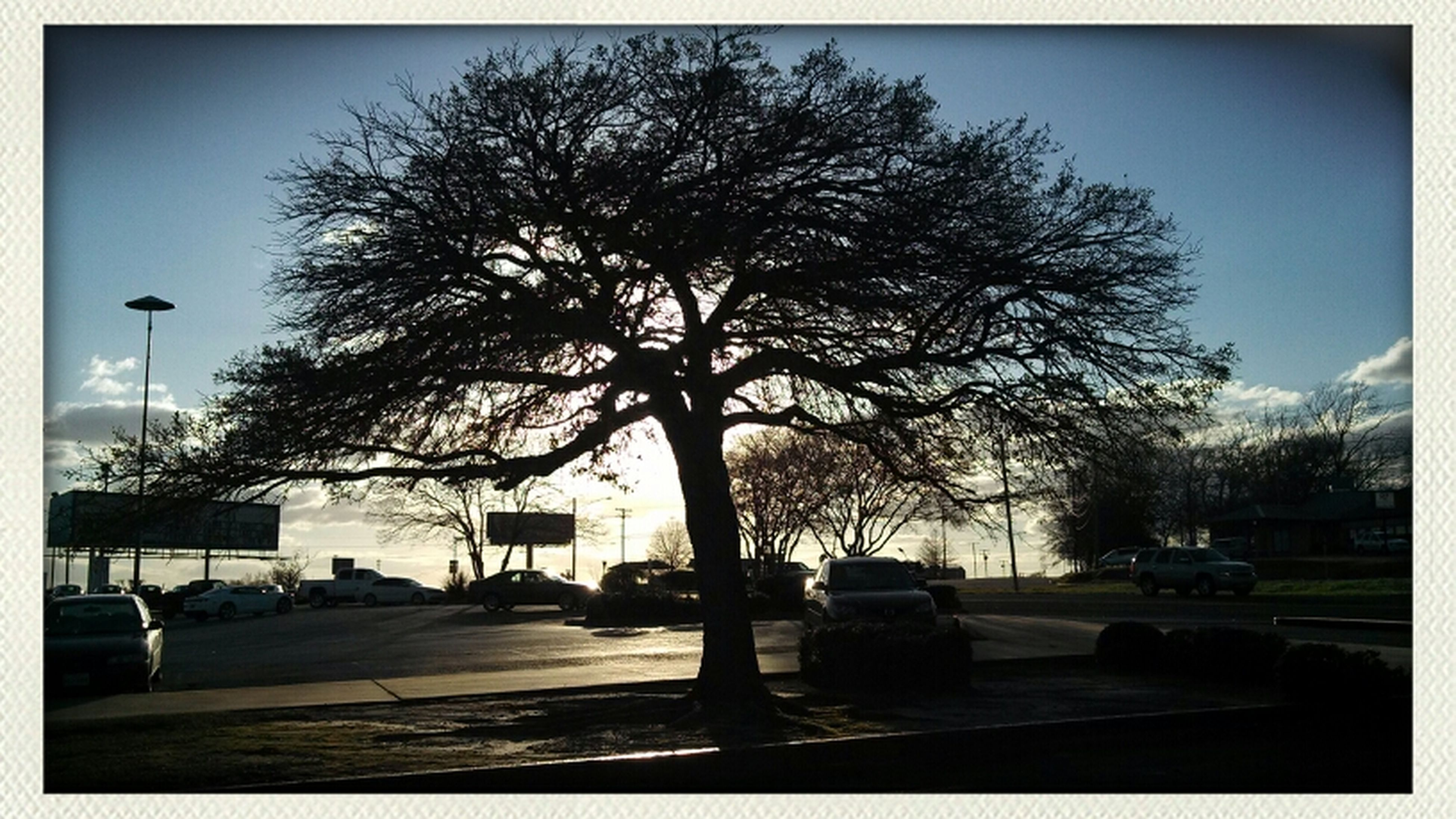 tree, transfer print, car, transportation, road, street light, auto post production filter, clear sky, street, building exterior, built structure, architecture, land vehicle, sky, the way forward, sunlight, city, road marking, mode of transport, outdoors