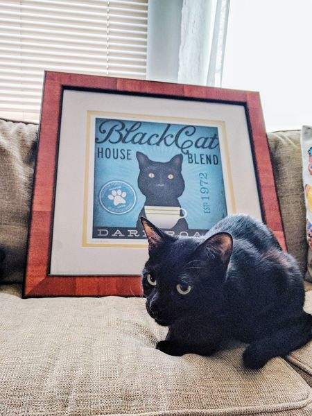 Love the frame, it's better than I pictured! What a great job! Domestic Animals Low Section Nexus6P Cats Of EyeEm Black Cat Black Cats Lovers Indoors  Pets Mammal Domestic Cat Yellow Eyes