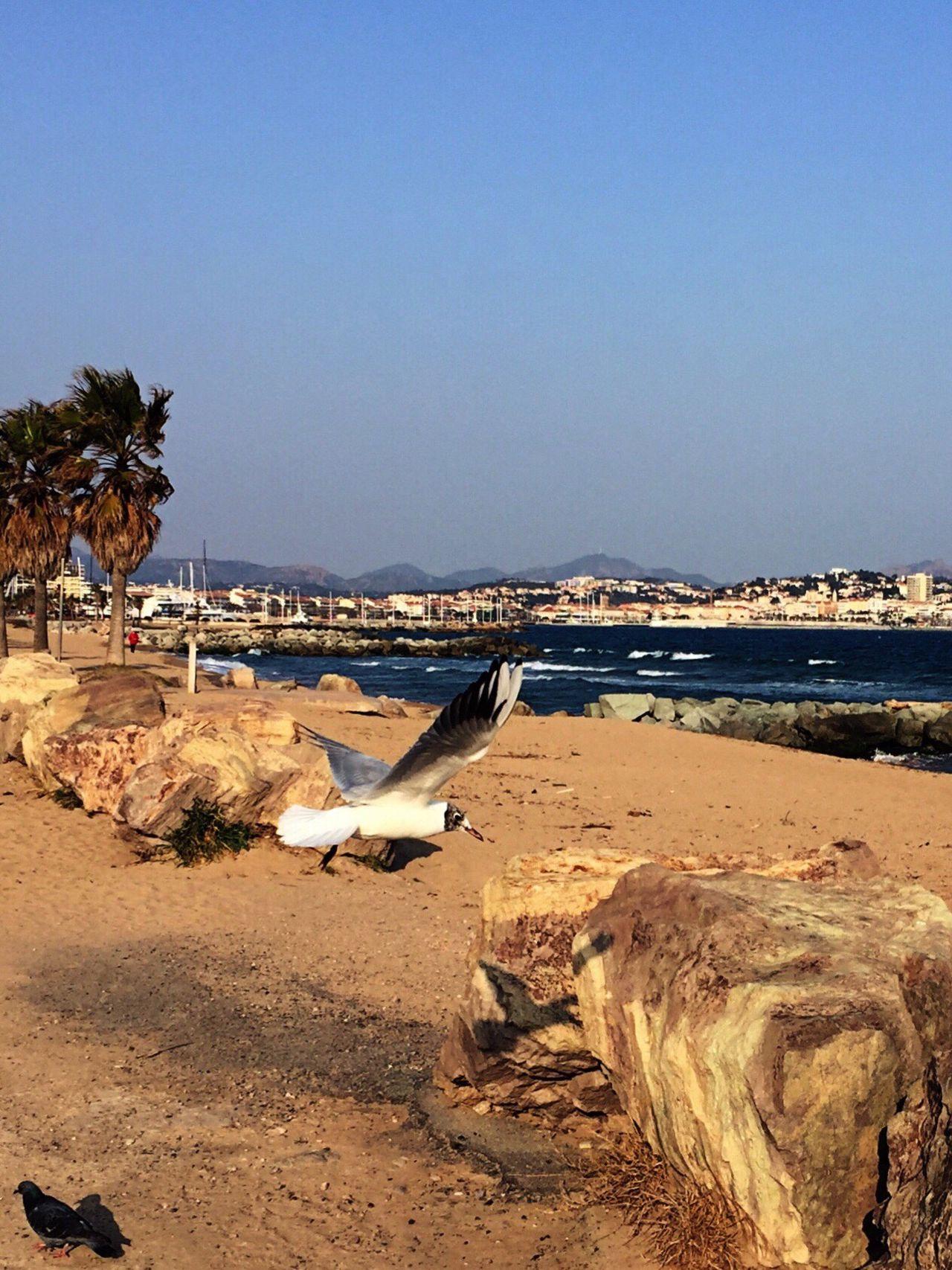 Beach Tranquility Sky Skyfie CIELFIE Palm Tree Water Beauty In Nature Bird Tree Oiseau Méditerranée Mer Mer Mediterranée Côte D'Azur Bord De Mer