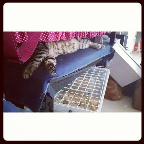 找動物 Cat_the_Dog Cat_SiuDik 小刺郎 Cat_of_instagram cats_of_instagram cat cats cat_lover cat_lovers cats_lovers catcat cat_model mimisphotography mimis_favourite