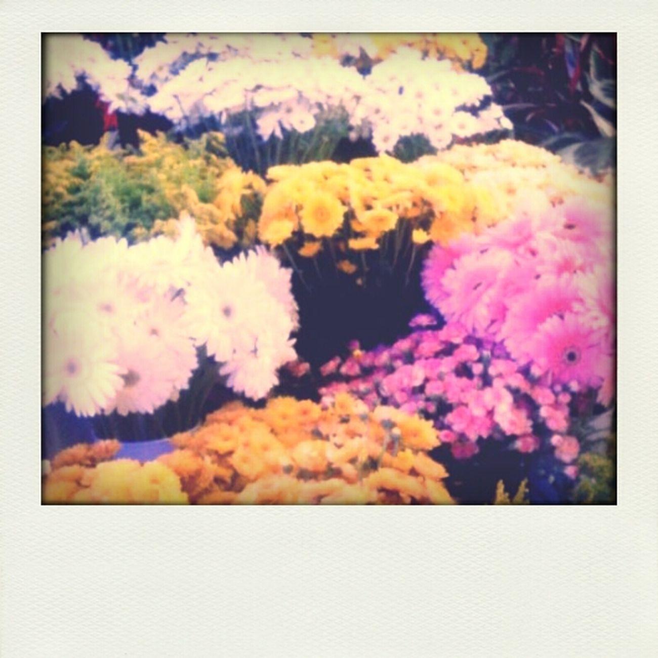 Flowers Color Follow4follow Likeforlike #likemyphoto #qlikemyphotos #like4like #likemypic #likeback #ilikeback #10likes #50likes #100likes #20likes #likere