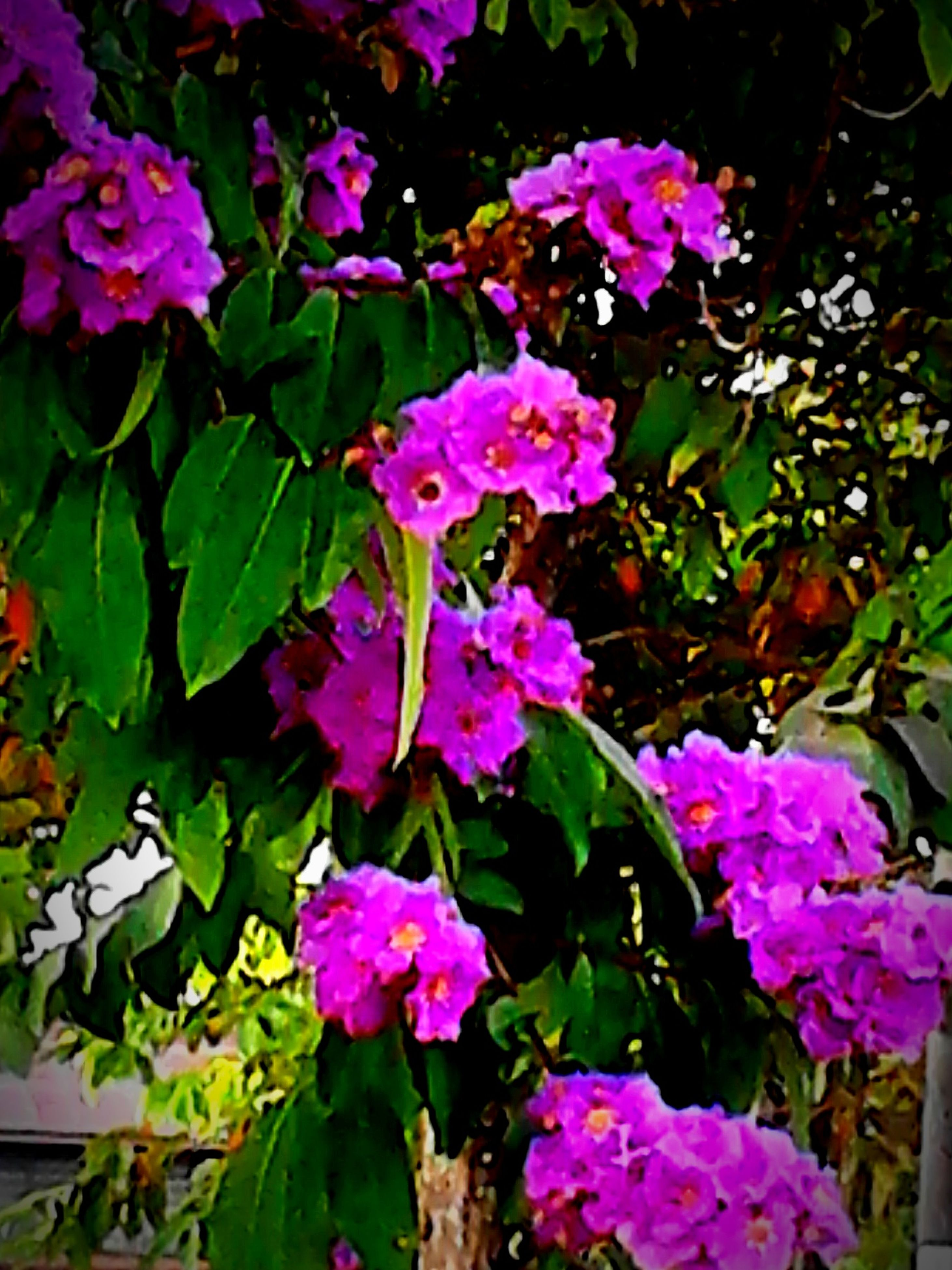 flower, freshness, petal, fragility, growth, leaf, pink color, plant, beauty in nature, purple, blooming, flower head, nature, high angle view, in bloom, outdoors, green color, park - man made space, day, no people