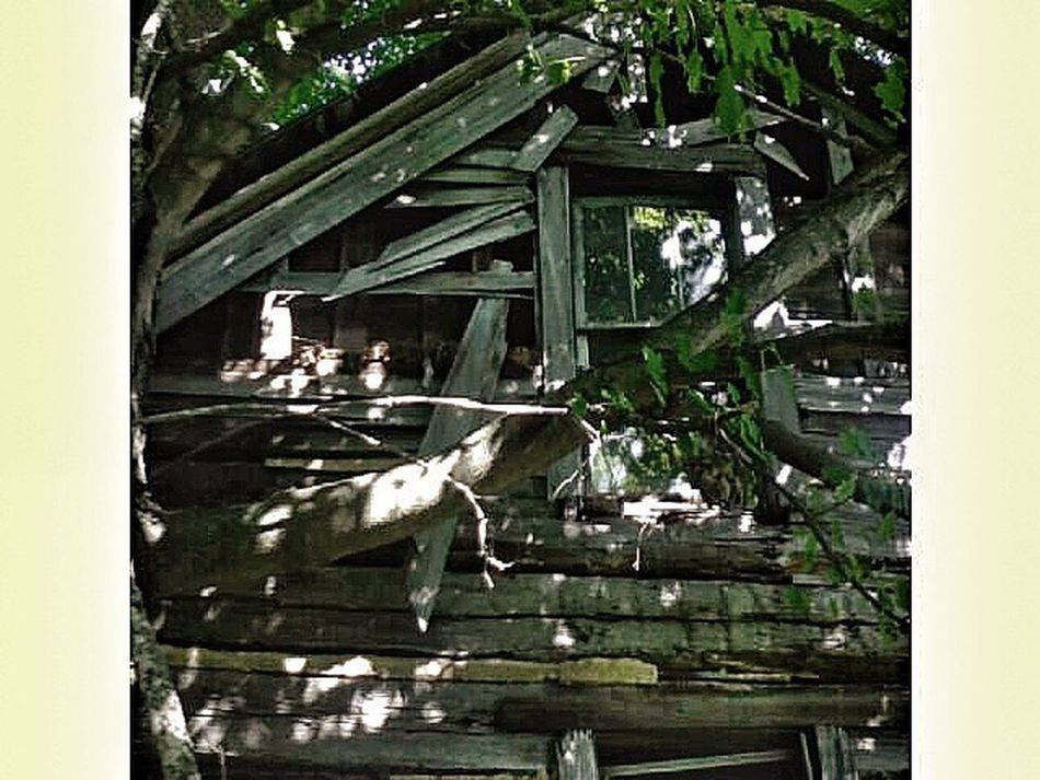 Log Cabin Old Homestead Great Grandparents Loveofmylife ♥ Cabin natures taking my great grandparents log cabin back. So Many Memories