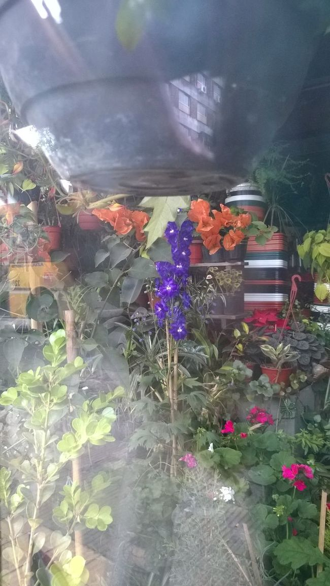 Bloom Colorful Flower Flower Shop Multi Colored Nature Plant Softness