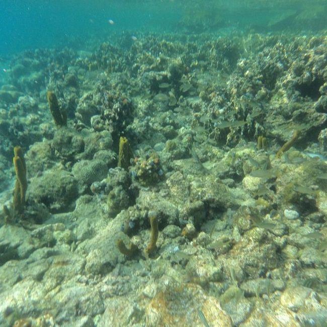 Mochima siempre será una buena opción!!! Beach Nature Sea Nature's Diversities The Great Outdoors - 2016 EyeEm Awards Found On The Roll Mochima Venezuela Viajandoconcedula