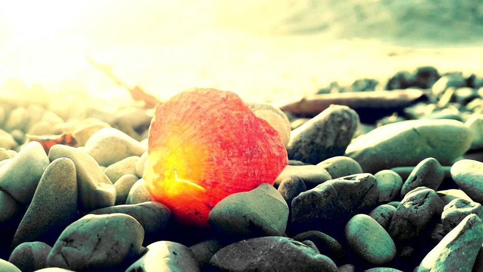 The beauty of little things. Beach Shell First Eyeem Photo