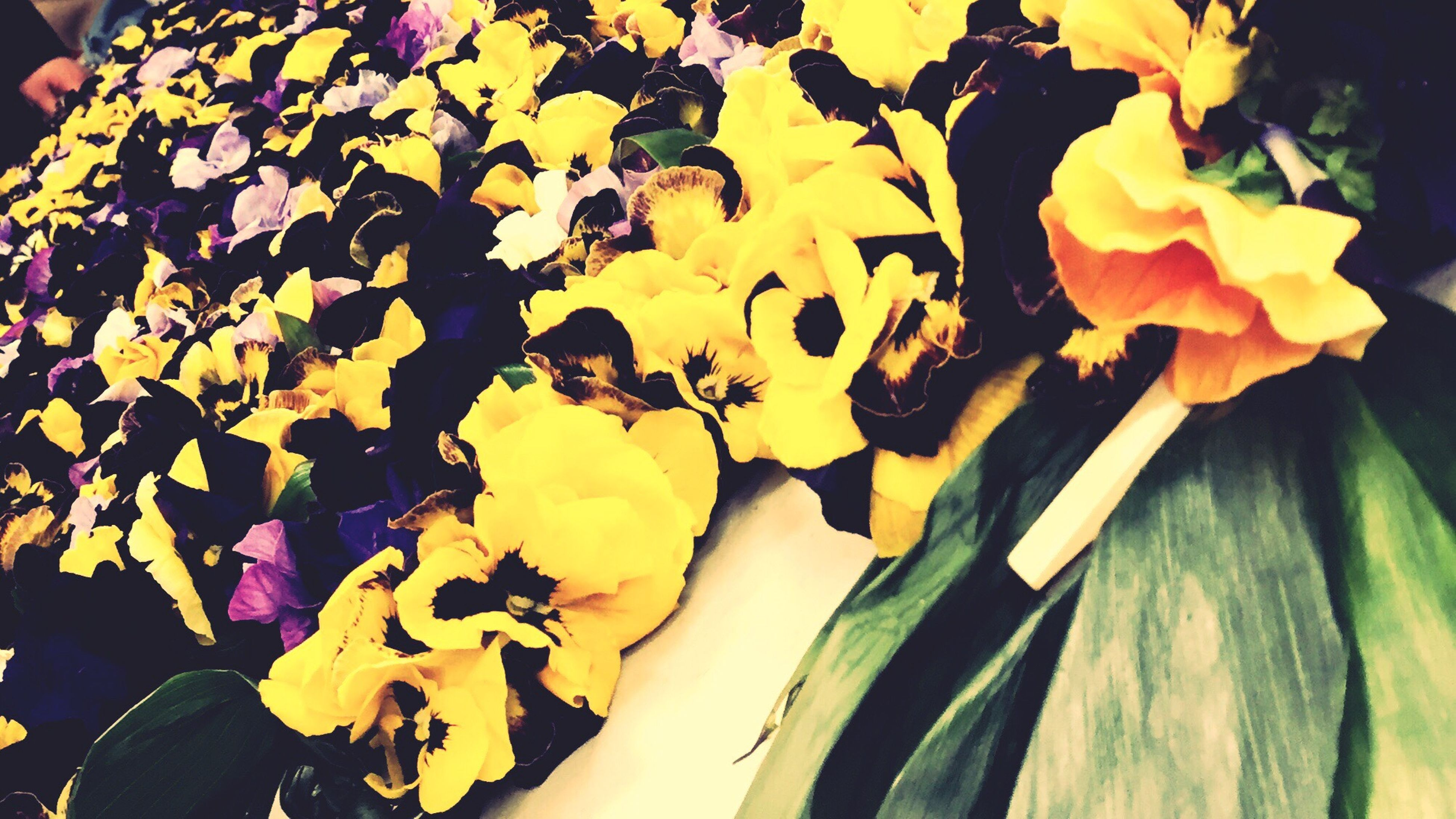 freshness, yellow, flower, indoors, close-up, petal, high angle view, leaf, fragility, orange color, plant, nature, no people, growth, part of, day, still life, beauty in nature, flower head