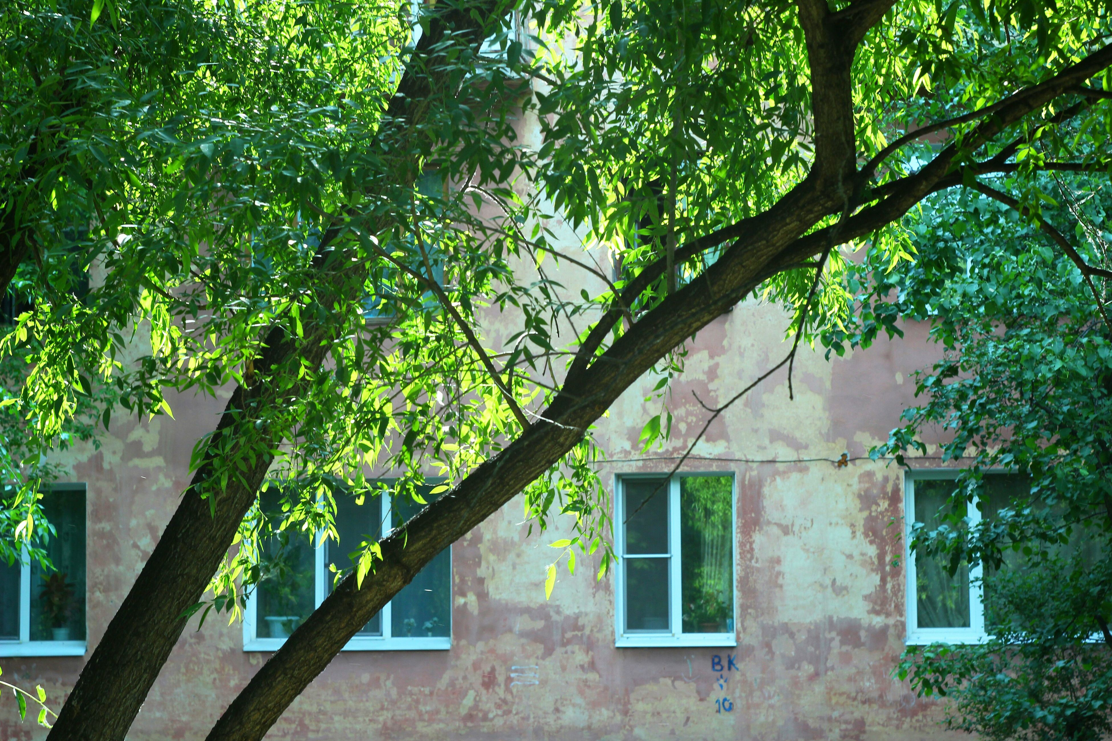 tree, green color, architecture, built structure, growth, no people, window, building exterior, day, branch, outdoors, nature, low angle view, plant, leaf